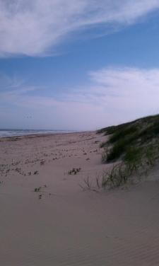 Dune Line